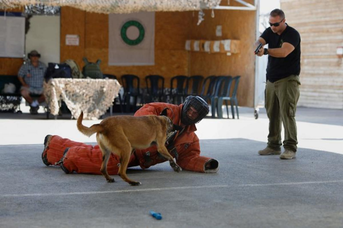 Foreign tourists watch an Israeli instructor demonstrate how to use a dog to neutralize an attacker during a simulation as they participate in a two-hour anti-terror course at the Caliber 3 shooting range, near the West Bank settlement of Efrat.