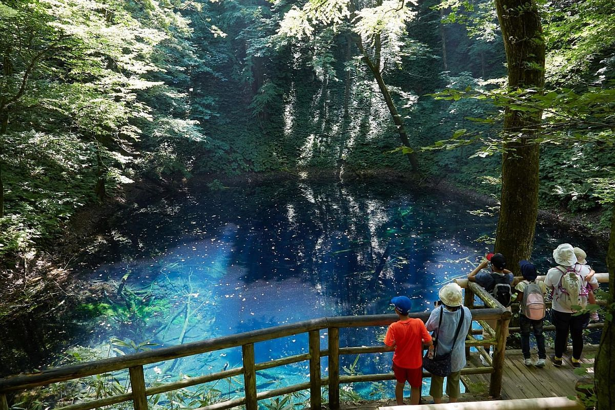 The mountains of Shirakami- Sanchi in the Tohoku region are home to unspoilt virgin forests.