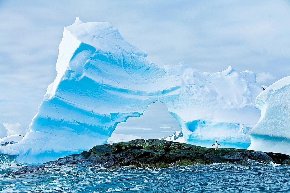 As more ice melts, the survival of Antarctica's native wildlife - such as whales, penguins and seals - will be in danger.