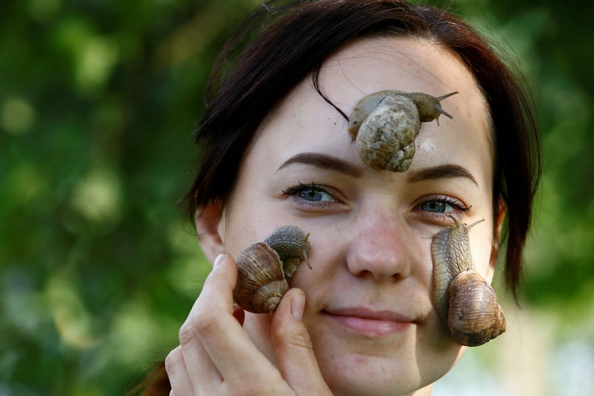 Victoria Rabkova, wife of the farmer Vladimir Rabkov, holds snails (Helix Pomatia) on her face at their farm in the village of Dolginovo, Belarus August 22, 2017.
