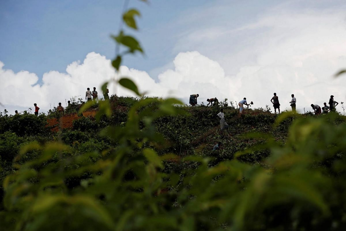 New Rohingya refugees clean bushes off a hill to build makeshift shelters in Balukhali near Cox's Bazar, Bangladesh, on Sept 2, 2017.
