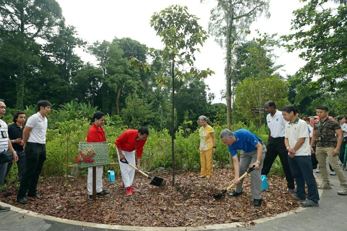 Indonesian President Joko Widodo, First Lady Iriana, PM Lee Hsien Loong and Mrs Lee plant a Sunda Oak at Learning Forest in Singapore Botanic Gardens on Sept 7, 2017.