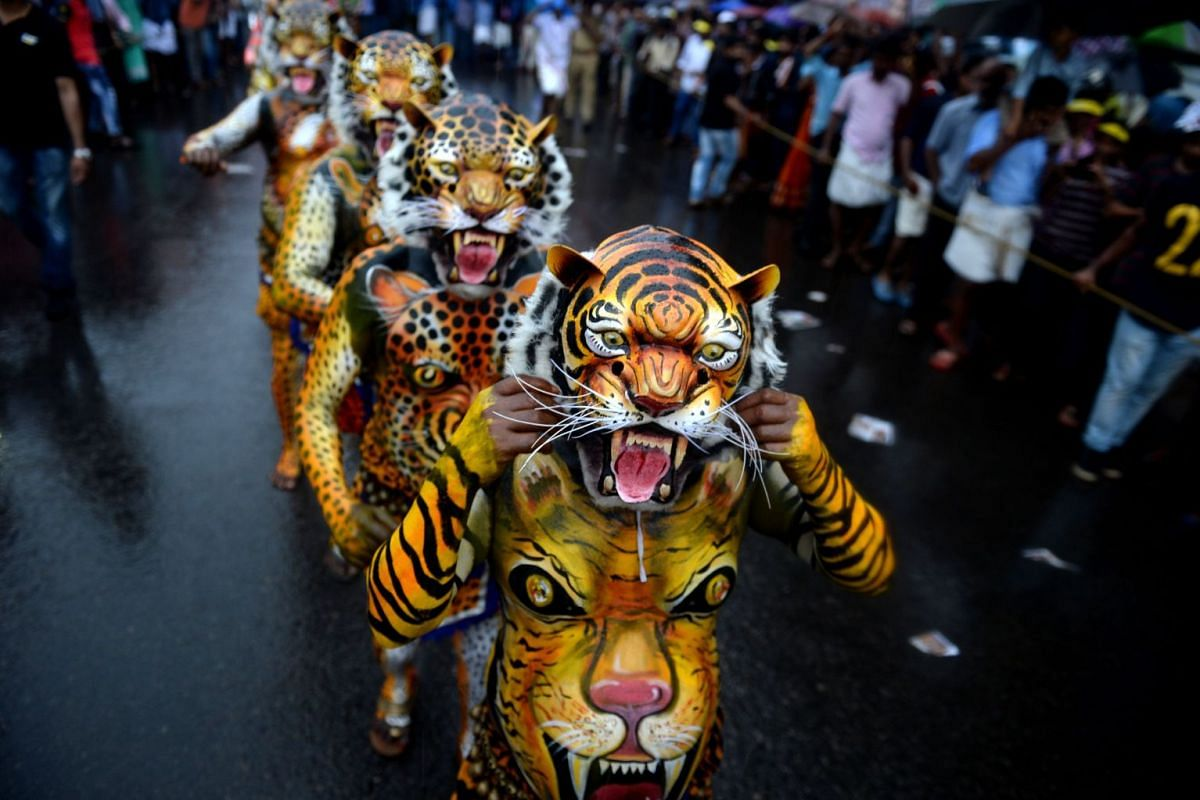 Indian performers painted as tigers take part in the 'Pulikali', or Tiger dance, in Thrissur on Sept 7, 2016. The folk-art event is held every year in the town during the 'Onam' festival. PHOTO: AFP