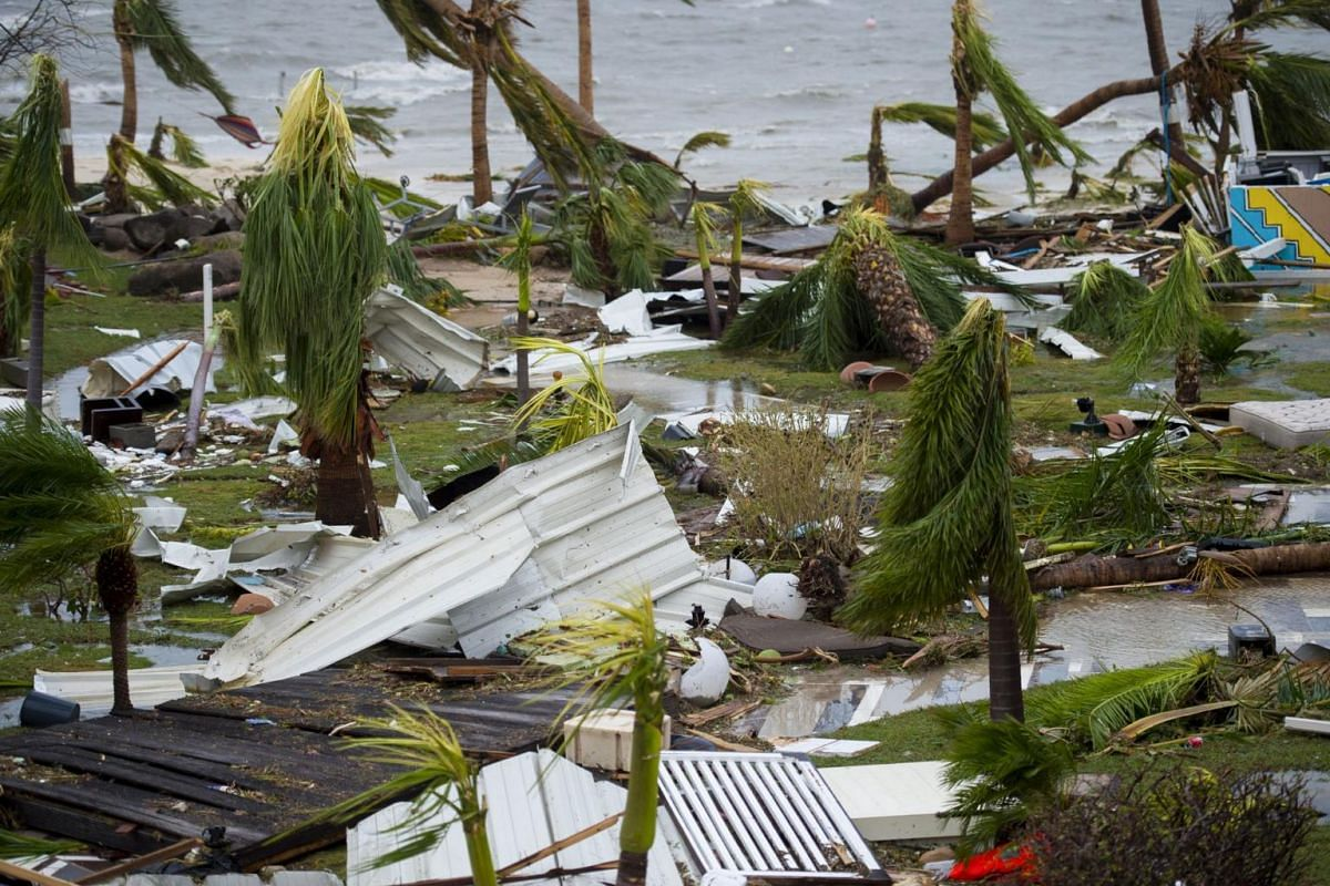 Destroyed palm trees outside the Mercure hotel in Marigot, on the Bay of Nettle, on the island of Saint-Martin in the northeast Caribbean on Sept 6, 2017.