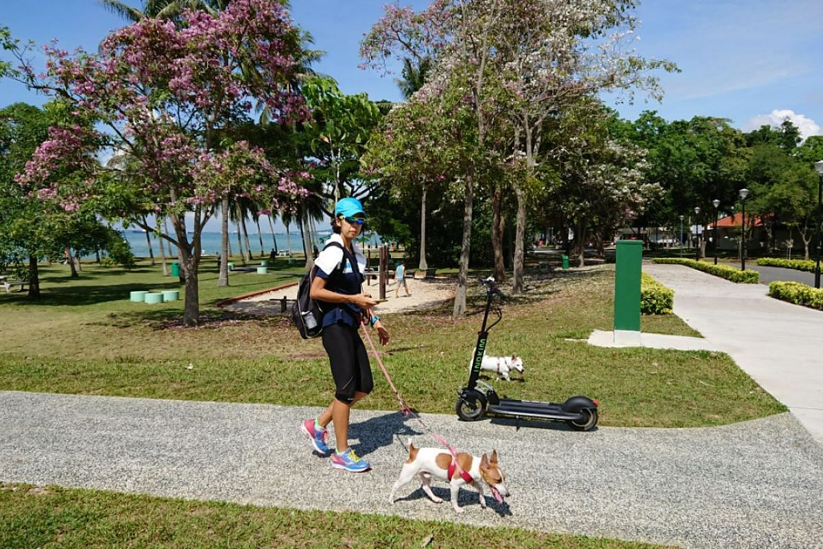 A woman walks her dog amidst the green canopies in East Coast park on Sept 8, 2017.