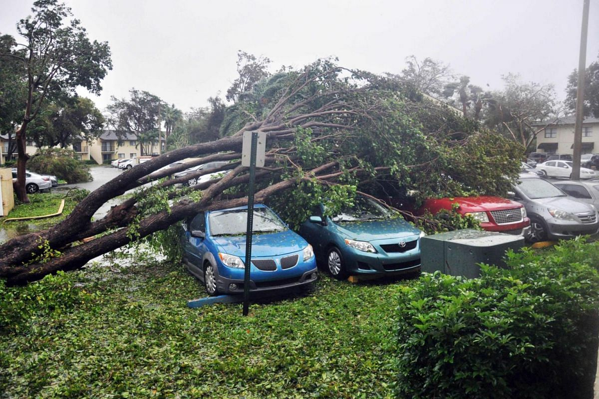 A fallen tree crashes atop a row of cars on Sept 10, 2017 Miami, Florida in the wake of Hurricane Irma.