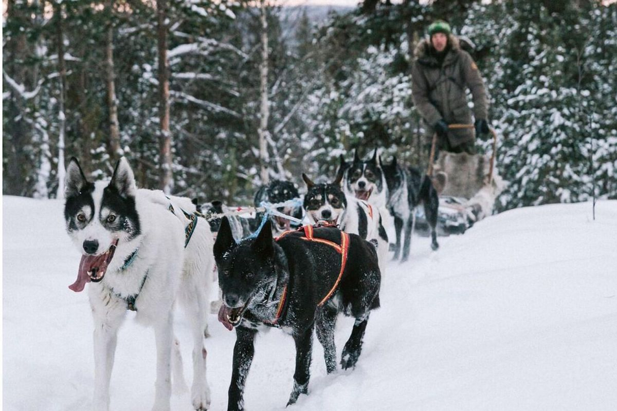 Dog sledding is an exhilarating experience.