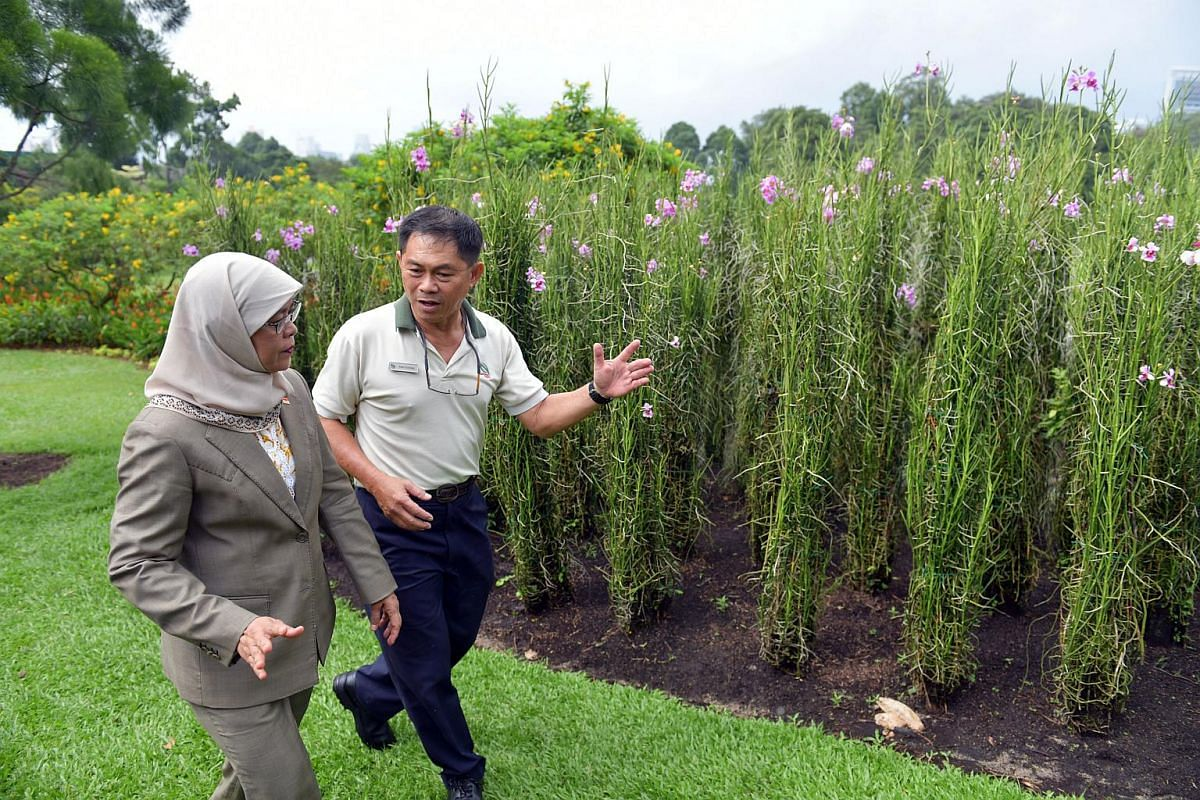 Madam Halimah Yacob being given a tour of the Istana gardens, ahead of her swearing-in ceremony, on Sept 14, 2017.