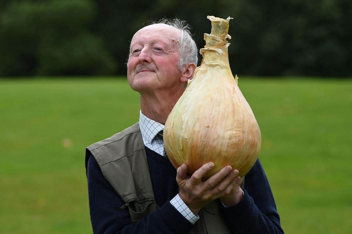 Peter Glazebrook poses for a photograph with his 6.6kg onion which won its class in the giant vegetable competition on the first day of the Harrogate Autumn Flower Show held at the Great Yorkshire Showground, northern England, on Sept 15, 2017.