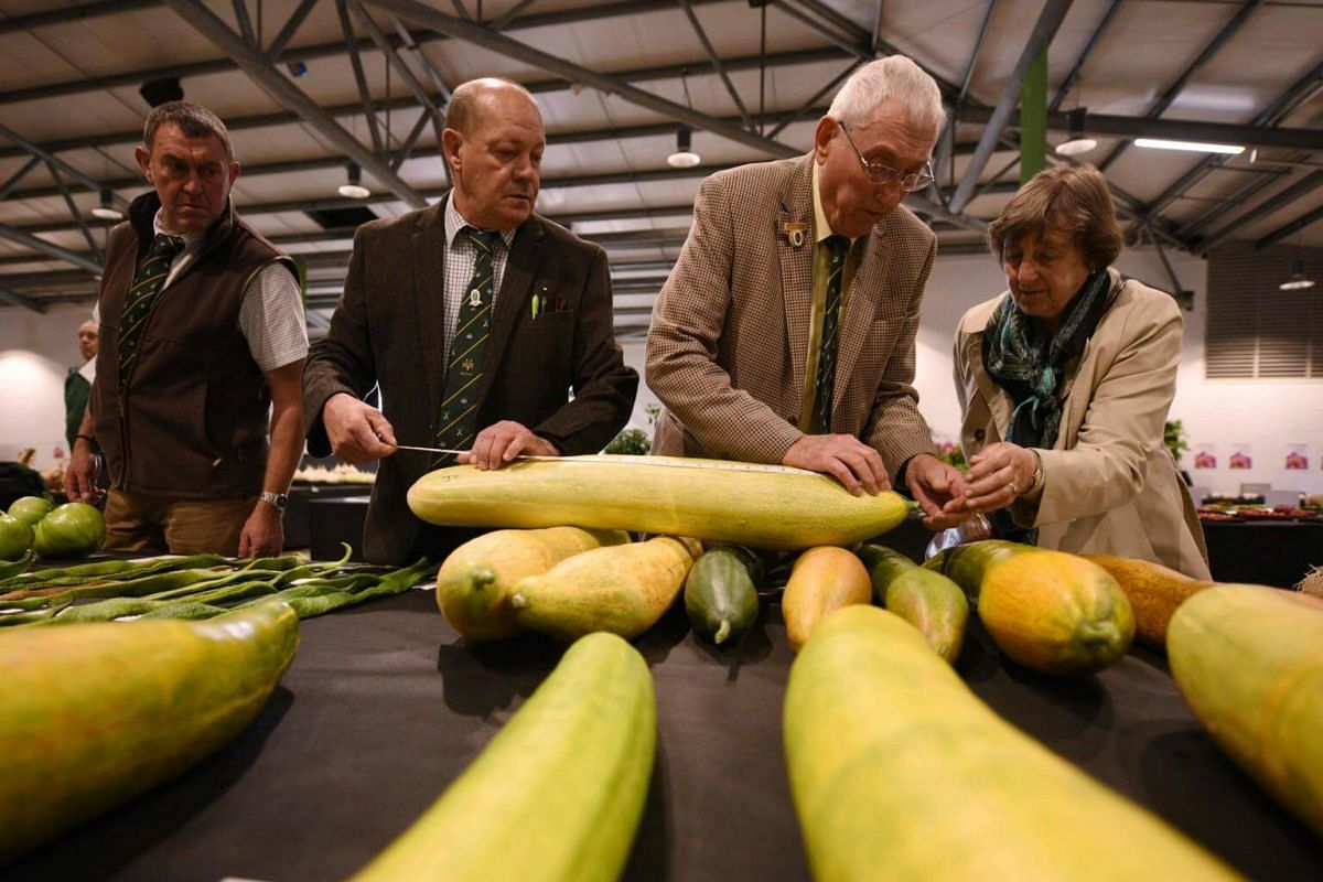 Cucumbers are measured in the Longest Cucumber competition on the first day of the Harrogate Autumn Flower Show held at the Great Yorkshire Showground, northern England, on Sept 15, 2017.