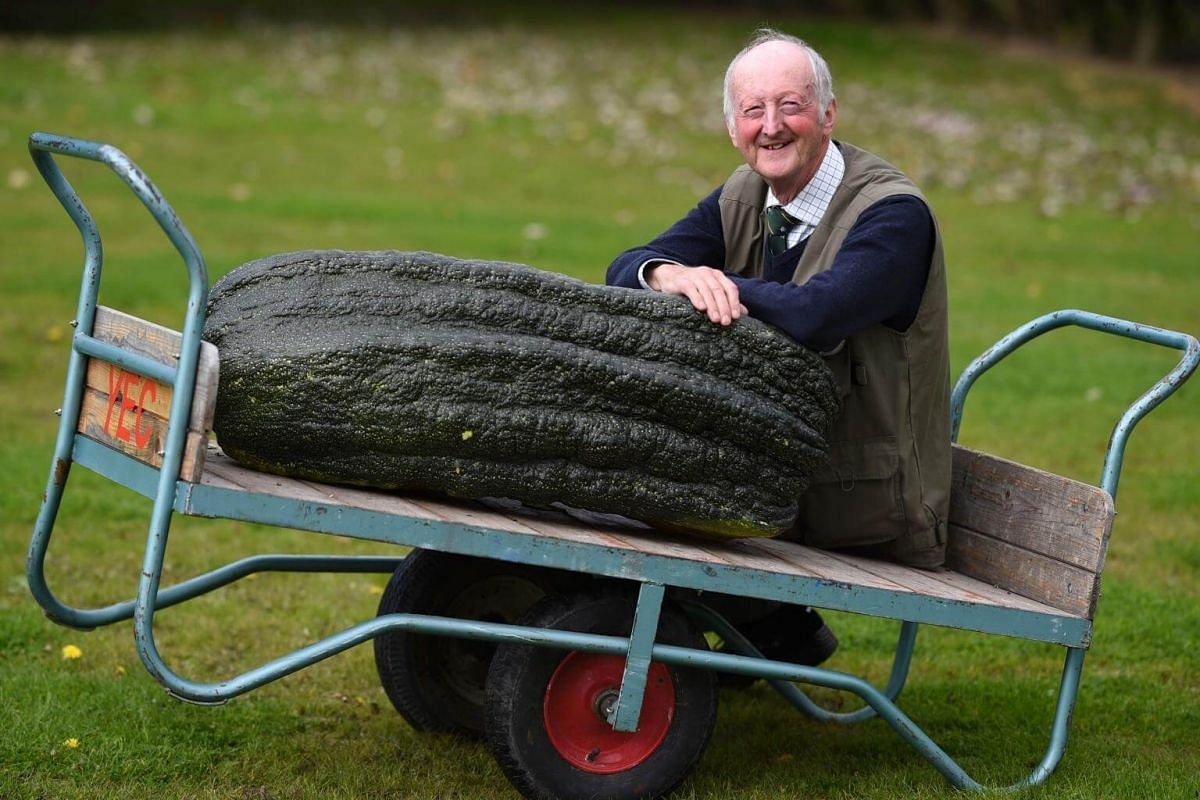 Peter Glazebrook poses for a photograph with his 66.8kg marrow which won its class in the giant vegetable competition on the first day of the Harrogate Autumn Flower Show held at the Great Yorkshire Showground, northern England, on Sept 15, 2017.