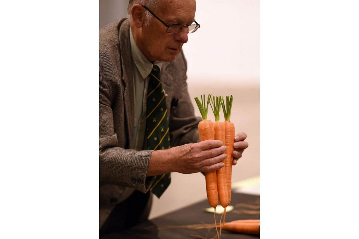 Carrots are judged on the first day of the Harrogate Autumn Flower Show held at the Great Yorkshire Showground, northern England, on Sept 15, 2017.