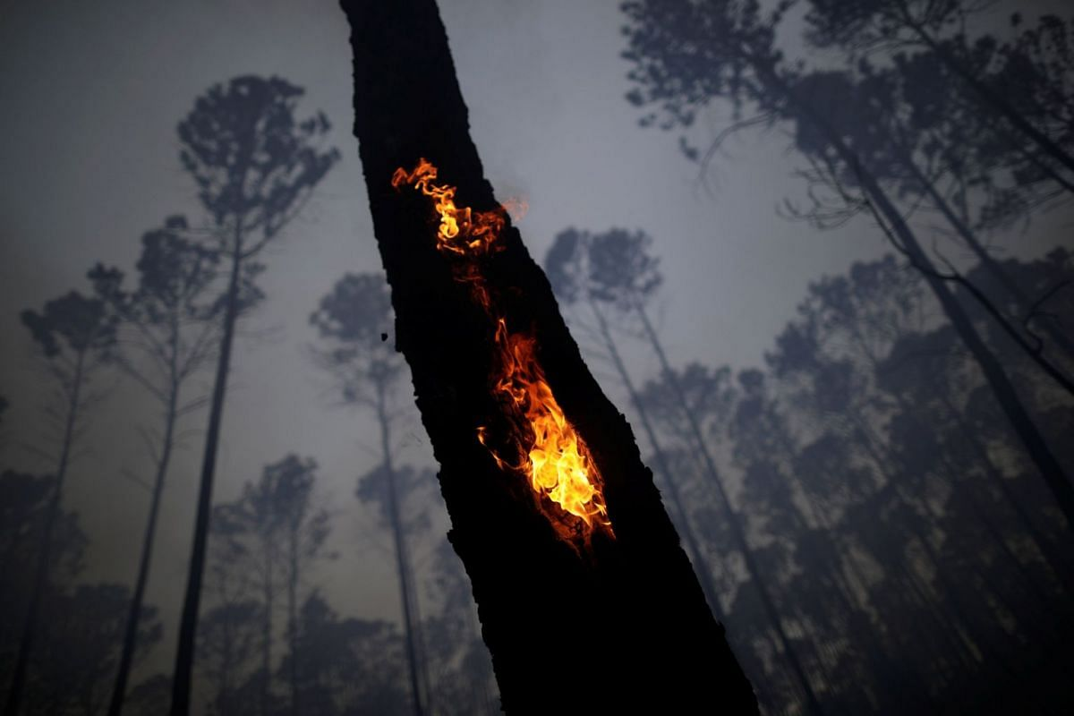 A view of the devastation caused by a forest fire in an area of Brasilia's National Forest, in Brasilia, Brazil, on Sept 18, 2017. PHOTO: REUTERS