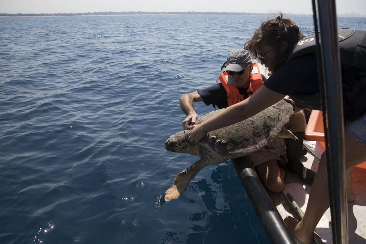 A loggerhead sea turtle is released back into the sea after being treated on a boat of the Sea Turtle Rescue Center of the Israel Nature and Parks Authority team, on Sept 18, 2017.