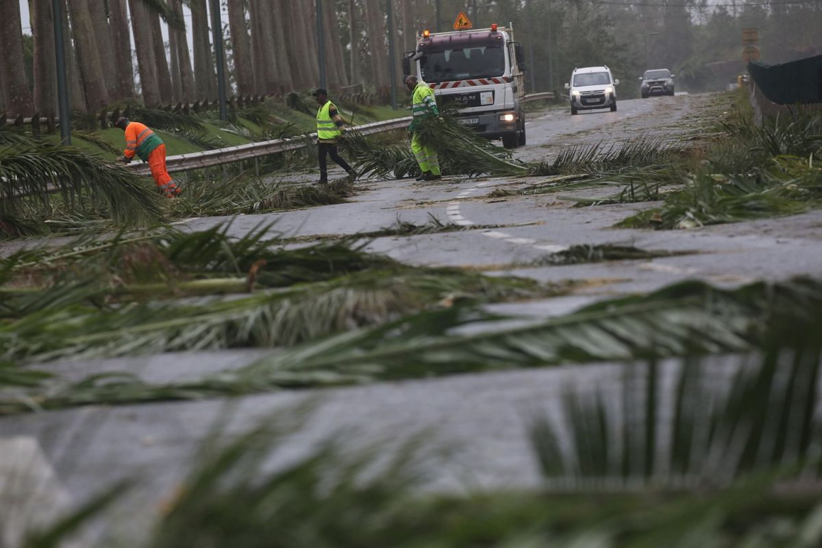 Workers remove fallen tree branches from a road in the Guadeloupe island which was hit by Hurricane Maria, September 19, 2017. PHOTO: REUTERS