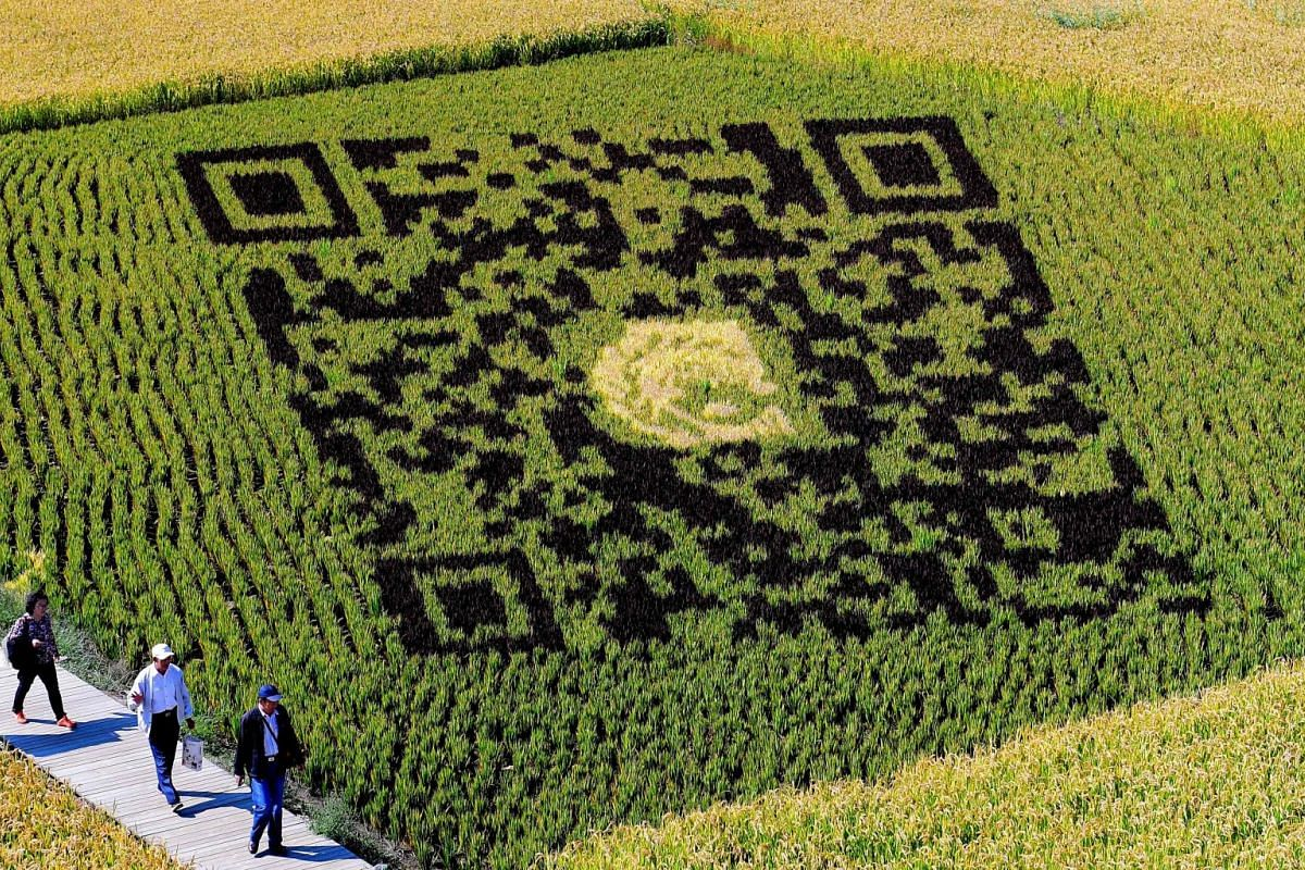 A QR code design created using different varieties of rice is seen in a paddy during the harvest season in Shenyang in China's northeast Liaoning province on September 20, 2017. The design aims to promote tourism in the area and boosts the income of