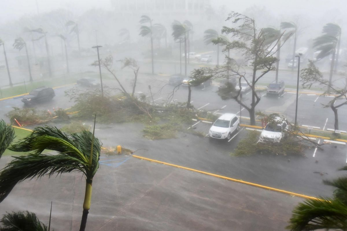 Trees are toppled in a parking lot at Roberto Clemente Coliseum in San Juan, Puerto Rico, on Sept 20, 2017, during the passage of the Hurricane Maria.