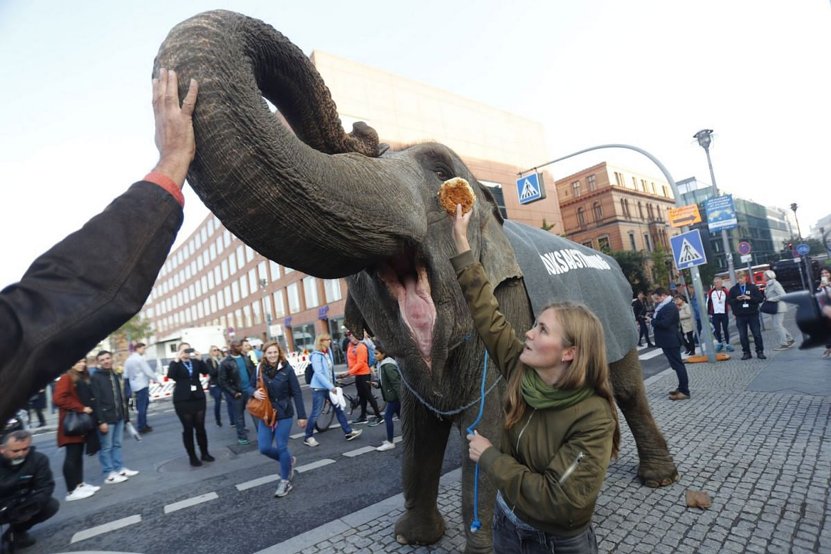 Activists protest with an elephant for plebiscites in Berlin, Germany, September 24, 2017. PHOTO: REUTERS