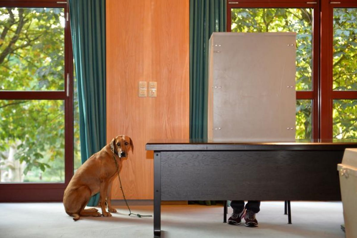 A dog looks on as its master casts his ballot at a polling station in Wuerselen, western Germany.