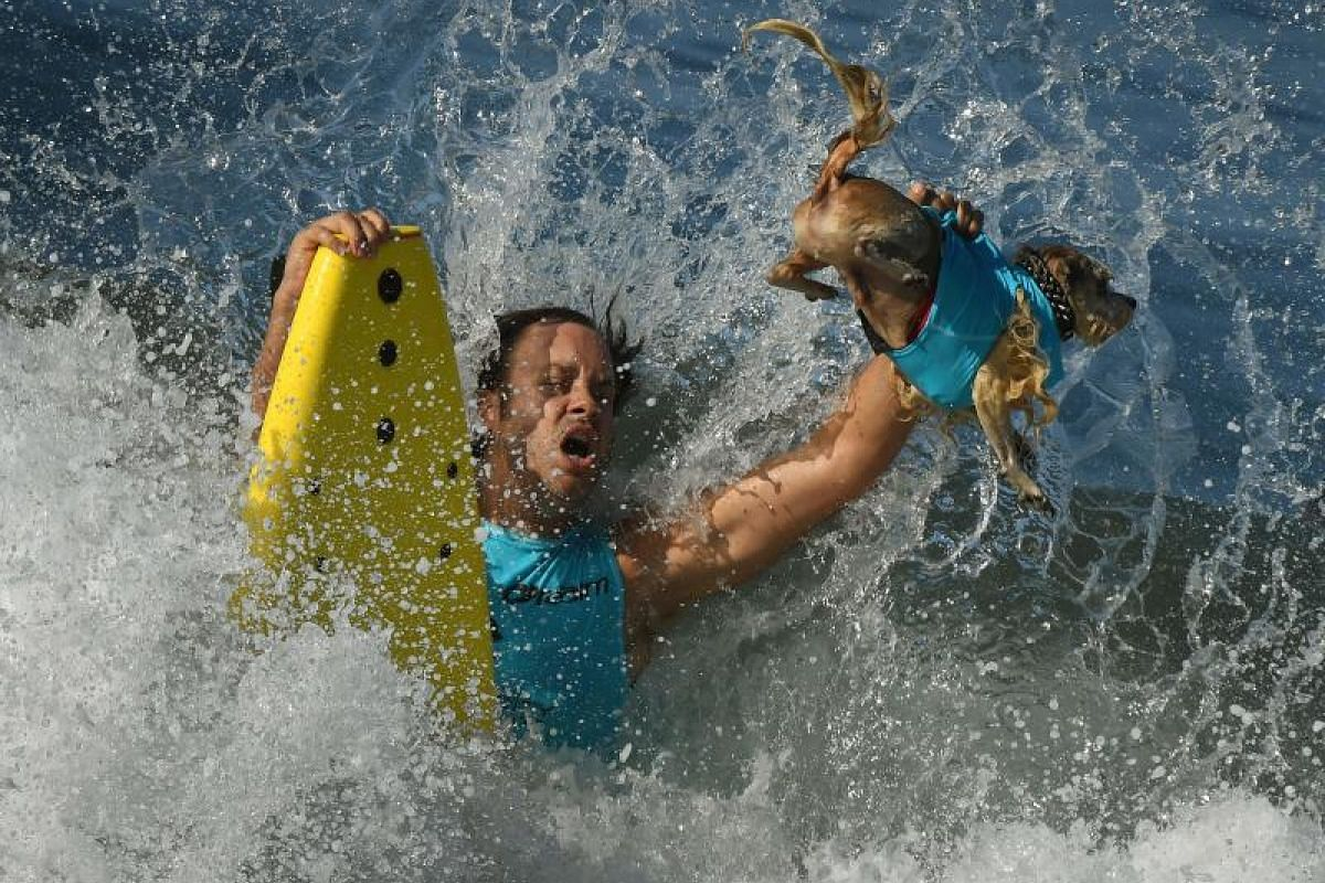 Surf dog Prince Dudeman and owner Ryan Thor get hit by a large wave in the second heat of the Small Dog event.