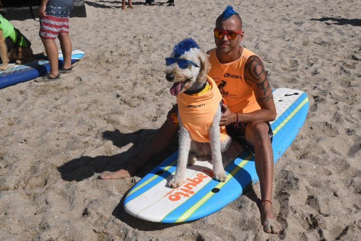 Surf dog Derby and owner Kentucky Gallahue wait to compete in the tandem event.