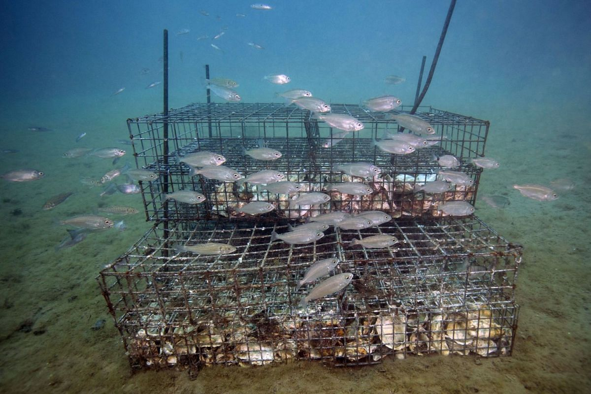 Young fishes swim near a Biohut artificial habitat allowing them to take refuge to escape predators, in Marseille, France,  October 4, 2017. With this technique, scientists hope to promote marine biodiversity partly destroyed by the urbanization of c