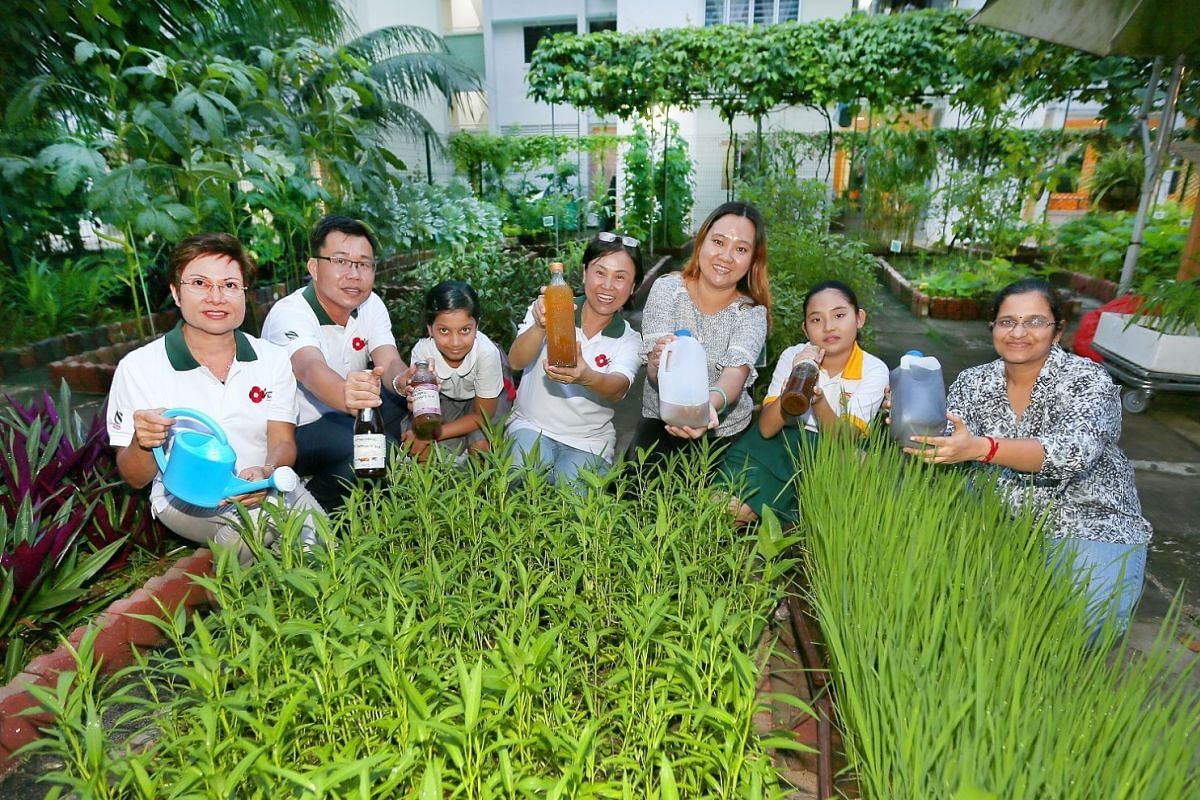 Volunteer gardeners (above) from Cosy Garden in Bukit Batok use wilted goods to produce enzyme solutions for their plants, which include the Carissa Carandas, whose fruit is used for pickling.