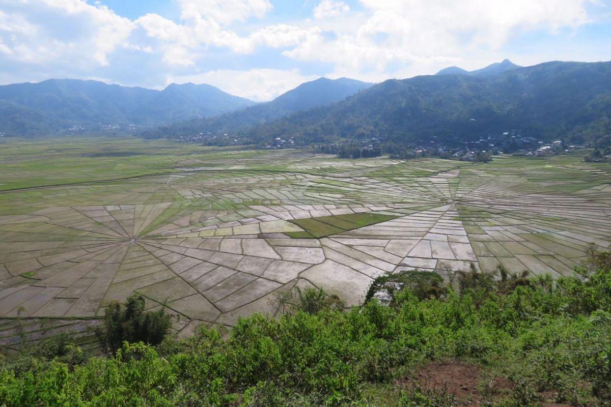The Spiderweb Padi Fields near Ruteng, about 25km north-east of Wae Rebo.