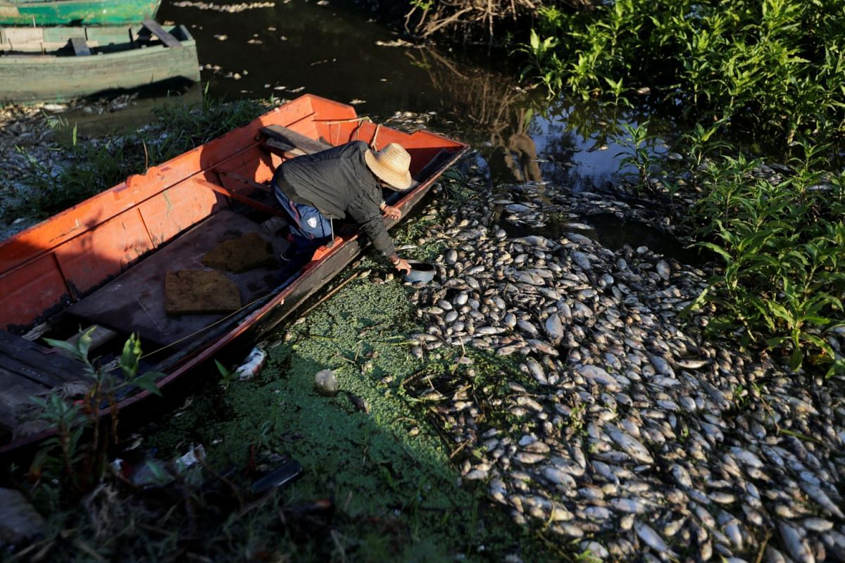 A fisherman picks up a pot floating among dead fish on the banks of the Confuso river, after authorities have taken samples for an investigation, in Villa Hayes, Paraguay October 15, 2017.