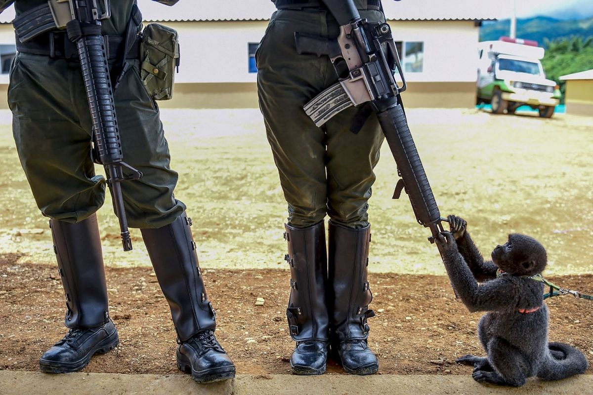A monkey plays with the rifle of a Colombian police woman in an unarmed zone known as territorial spaces of training and reincorporation (ETCR in Spanish), where former FARC guerrilla fighters receive training to allow their adaptation to civilian li