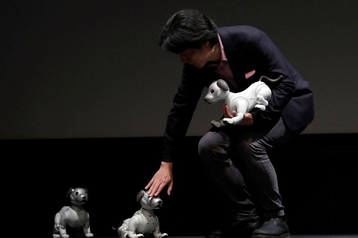 "Sony Corp's Senior General Manager of AI Robotics Business Group Izumi Kawanishi touches entertainment robot ""aibo"" at a news conference in Tokyo, Japan November 1, 2017. PHOTO: REUTERS"