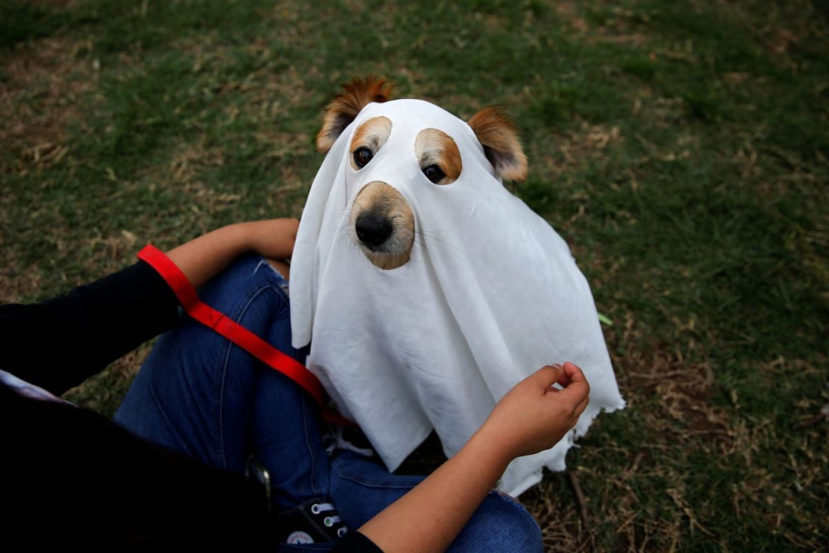 A woman dresses up her dog to celebrate Halloween at a park in Lima, Peru, October 31, 2017. PHOTO: REUTERS