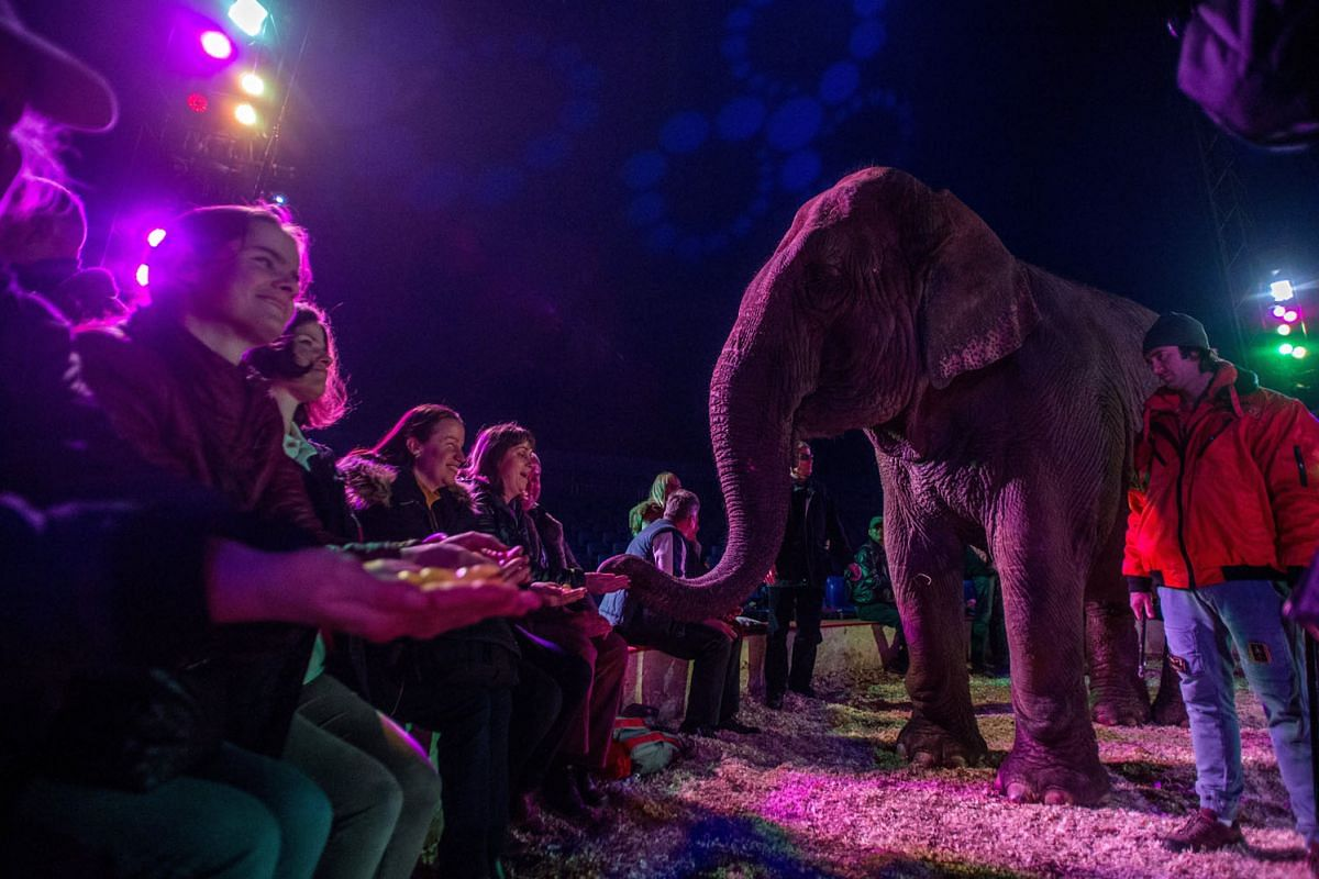 Members of the audience offer grapes to an elephant during a special performance of the Richter Florian Circus company held for blind and visually impaired persons in Budapest, Hungary, November 2, 2017. PHOTO: EPA-EFE