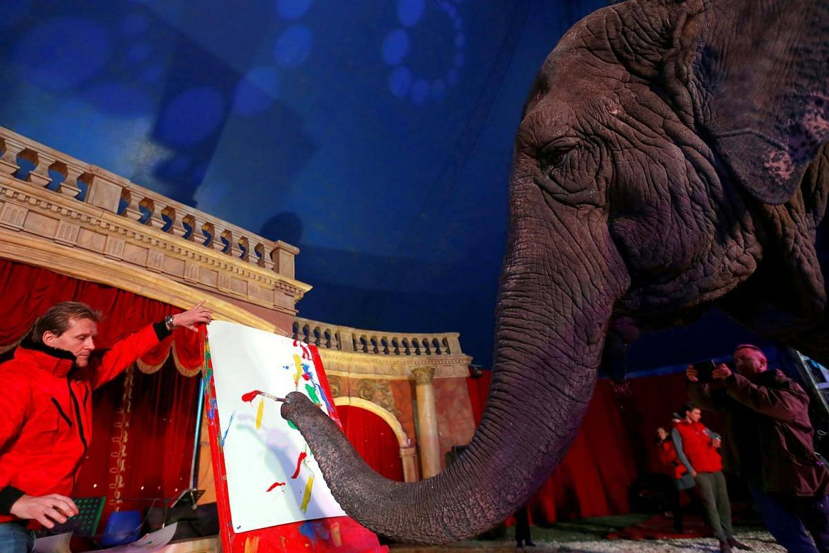 Sandra, a 42-year-old elephant, paints with her trunk in a Hungarian travelling circus of Florian Richter Circus in Budapest, Hungary.