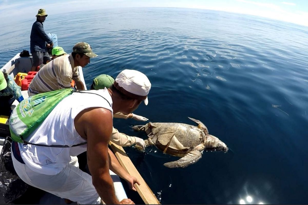 A dead sea turtle is retrieved from the water in Bahia De Jiqulisco, Usulutan, off the Pacific coast of El Salvador November 3, 2017, in this still image take from social media.