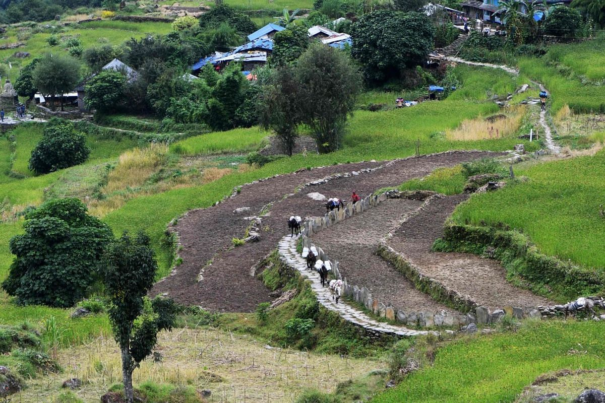 Mules carry goods along the restored trails in Dhading, some 100km northwest of Kathmandu. Lapa, a village in Dhading, was once a bustling trading point for the communities of the remote area in northern central Nepal. The only access to the area is