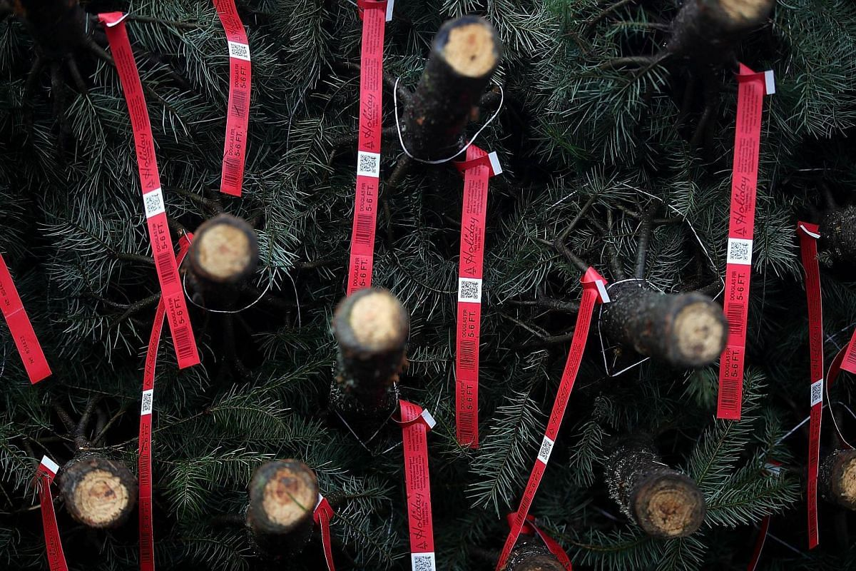 Tags hang from freshly-harvested Christmas trees at Holiday Tree Farms on Nov 18, 2017 in Philomath, Oregon.