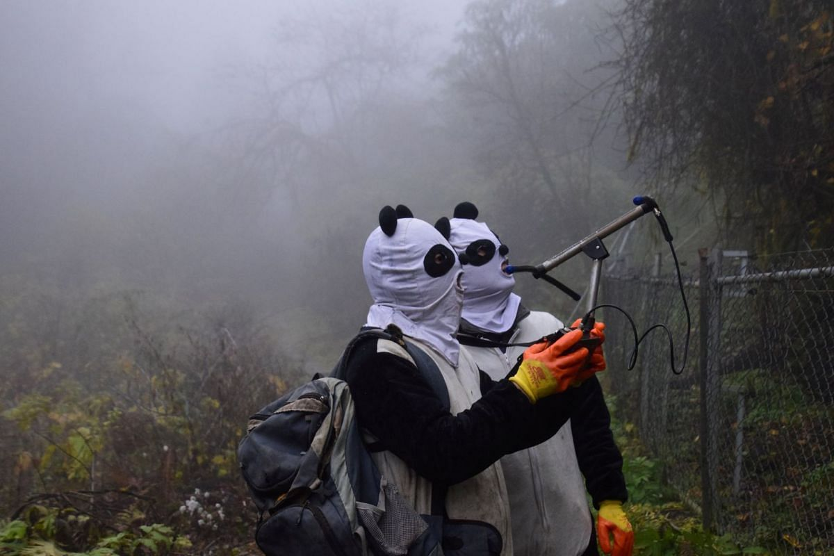 A photo released on November 21, 2017 shows workers wearing panda masks using a wireless device to detect the location of Yingxue, a panda which has received survival training, at a protection base before reintroducing it to the wild, in Wolong, Sich