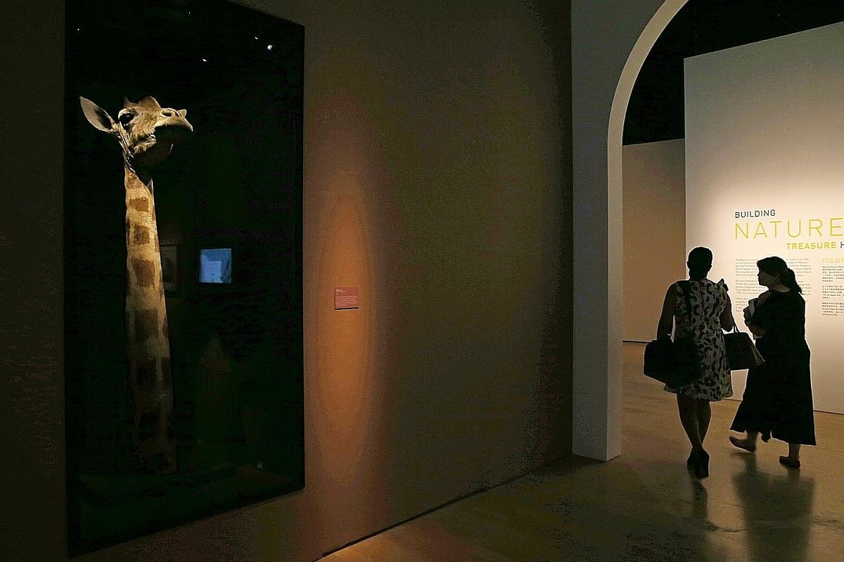 Creature feature: Exhibits include taxidermied animals (above and left).