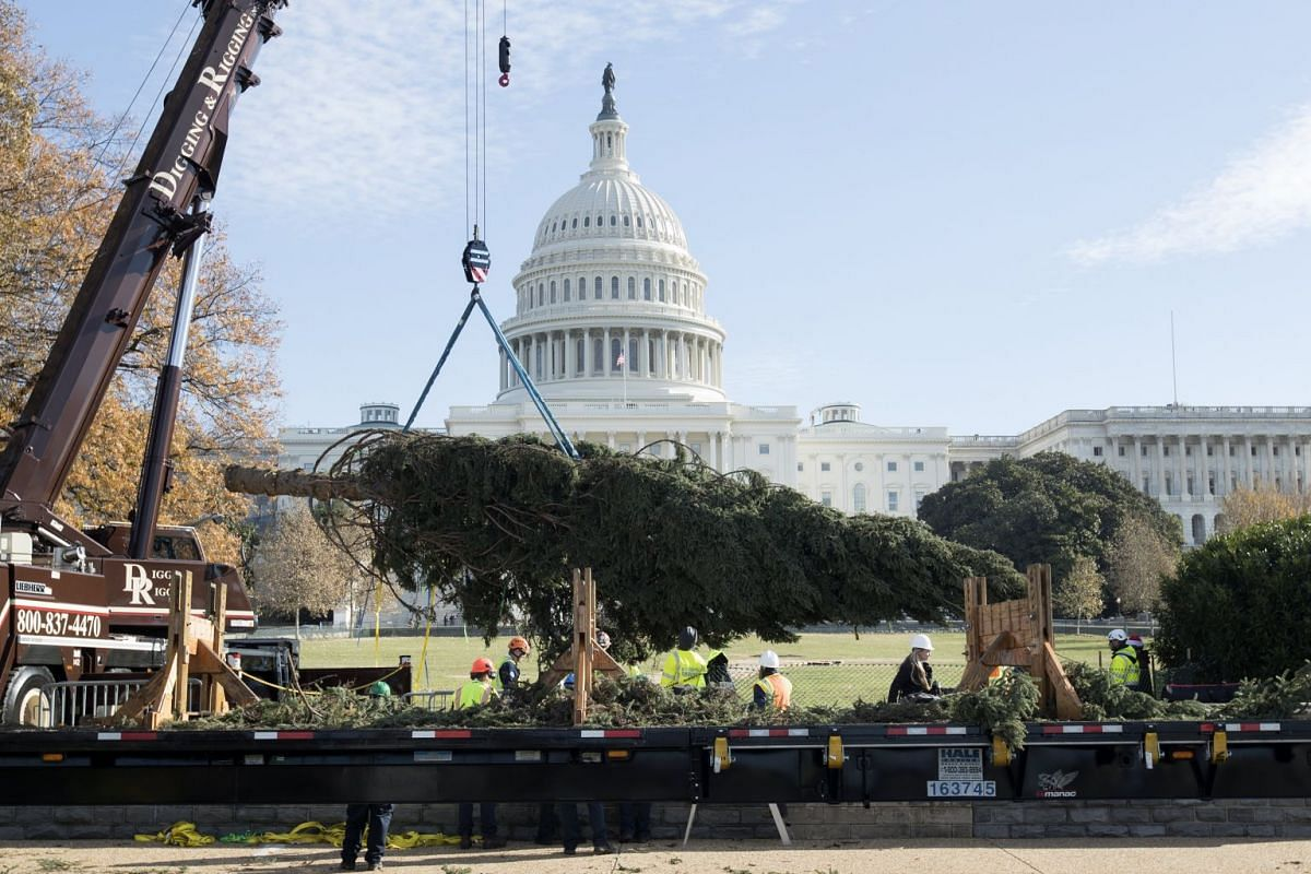 The Capitol Christmas tree arrives on a truck before being placed on the West Front of the US Capitol, in Washington, DC, USA, November 27, 2017. PHOTO: EPA-EFE