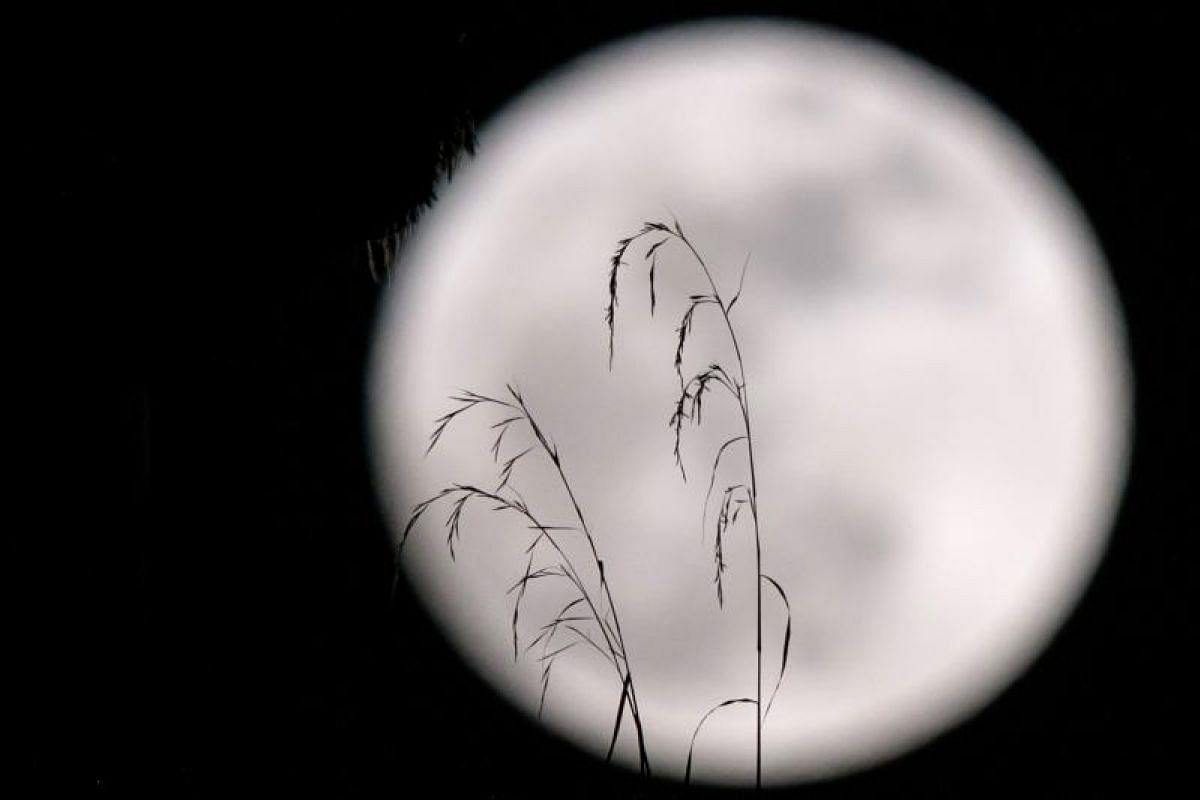 A supermoon behind plants on a balcony of a residential block in Hong Kong.