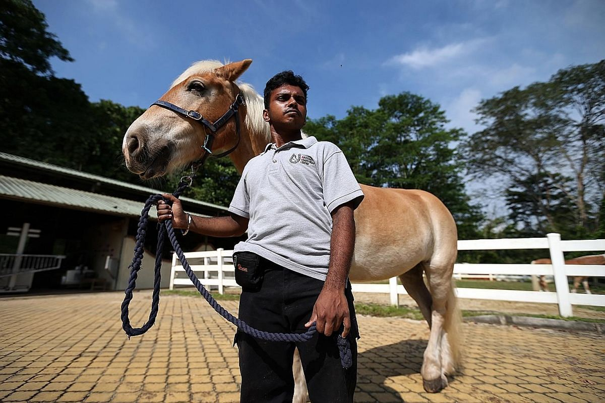 Mr Rueban Swaminathan tried various job attachments while in school but did not enjoy the work. He found his calling while undergoing equine-assisted vocational training with the Equestrian Federation Singapore.