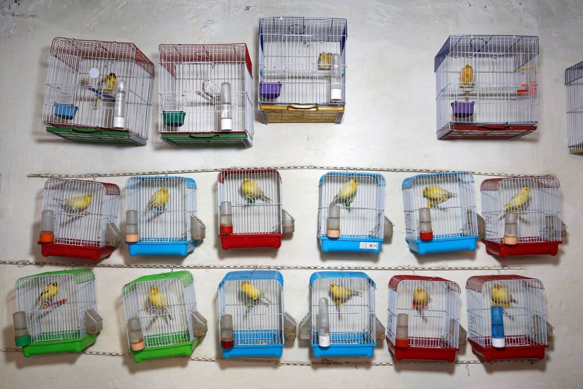 Canary cages are seen inside a shop for sale at a bird market in Kabul, Afghanistan December 4, 2017. PHOTO: REUTERS
