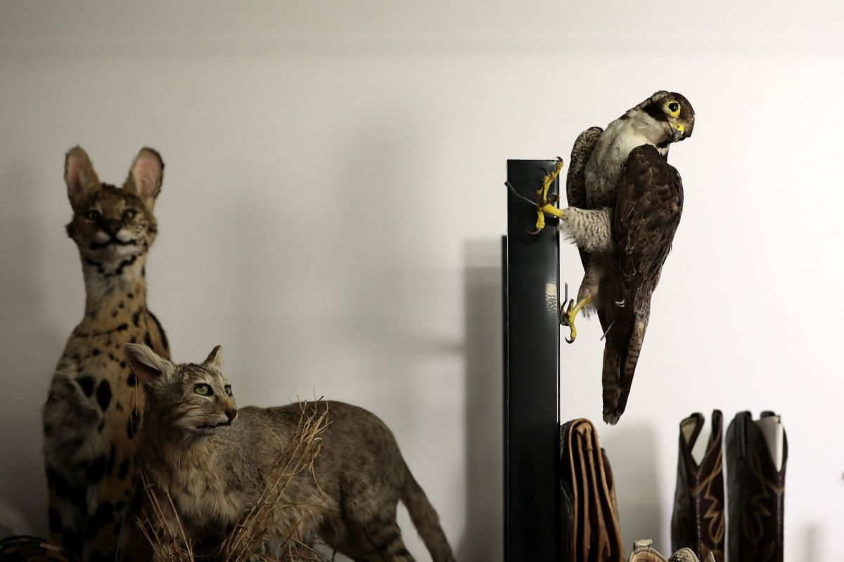 Taxidermy of endangered species seized by UK Border Force officers at Heathrow Airport sit on display at Custom House near Heathrow in London, Britain November 22, 2017.