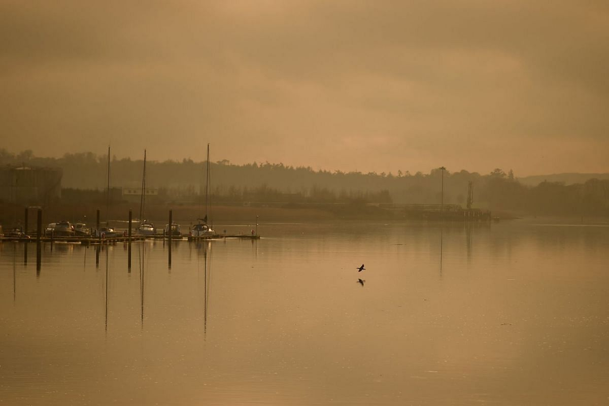 A cormorant flies low in evening fog at sunset in the County Wexford Marina in New Ross, Ireland, Dec 18, 2017. PHOTO: REUTERS