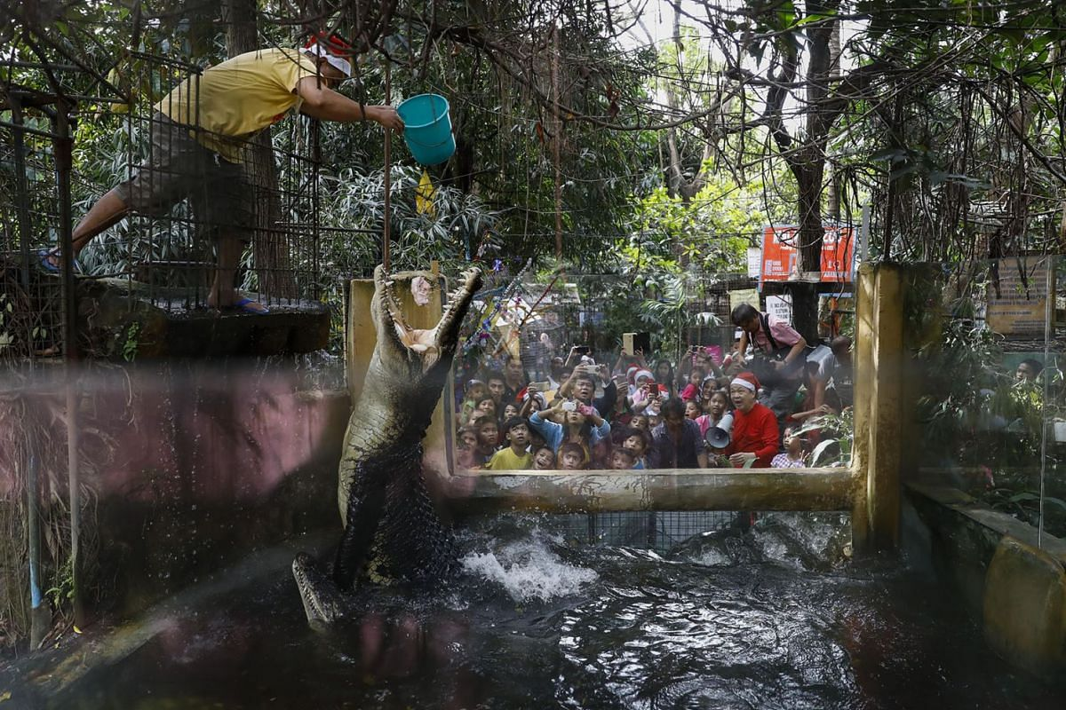 A zoo staff feeds crocodiles as visitors look on at the Malabon Zoo in Malabon City, north of Manila, Philippines December 21, 2017. PHOTO: EPA-EFE