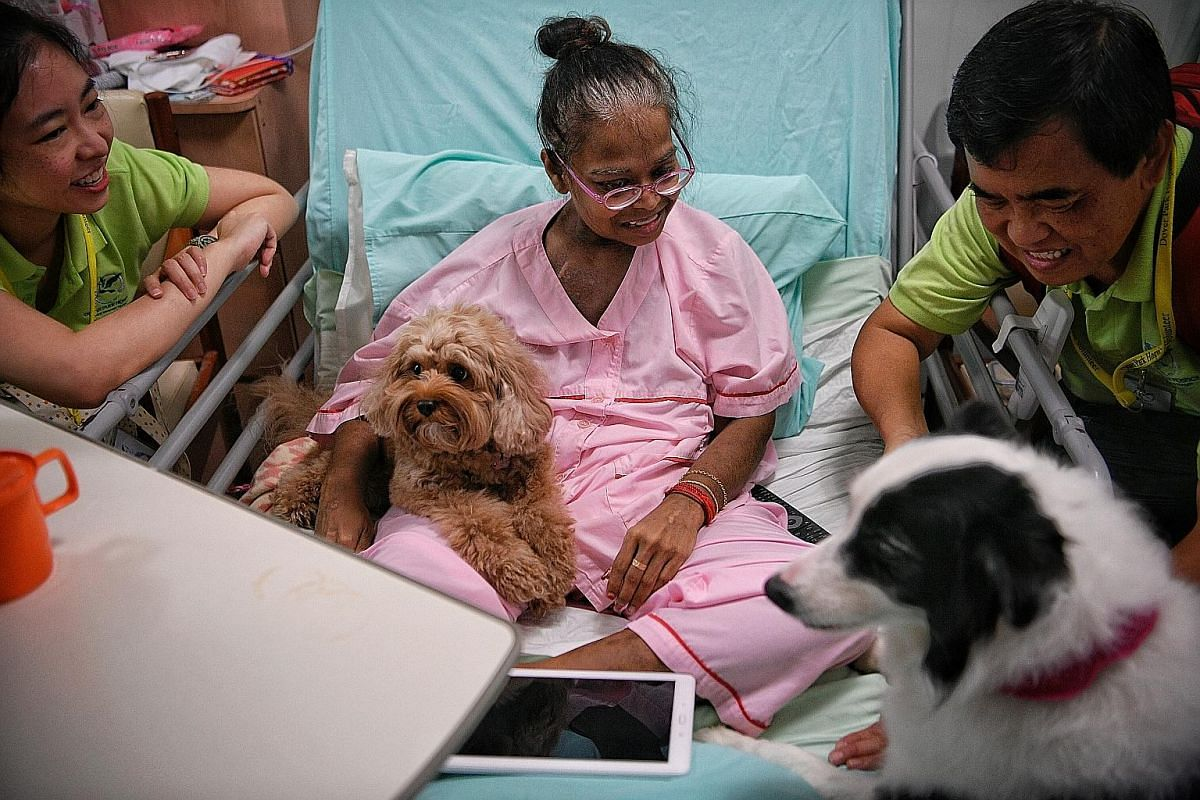 Patient Mariamah Ramakrishnan, 47, gets a visit from volunteers Han Lilin (left), 34, and Bernard Yeo, 61, as well as Bailey the cavoodle (a cross between a cavalier King Charles spaniel and a poodle) and Jacque the border collie during a weekend animal-t
