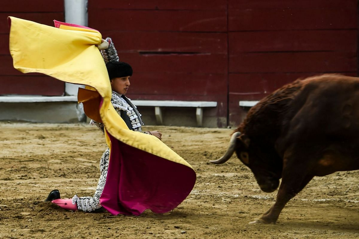Peruvian bullfighter Andres Roca Rey performs during a bullfight at the Canaveralejo bullring in Cali, department of Valle del Cauca, Colombia on December 31, 2017, during the 60th Cali Fair. PHOTO: AFP
