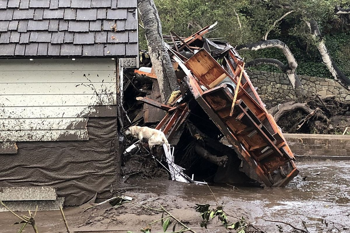 Reilly, a search dog with the fire department, looks for victims amid debris from homes destroyed by a mudslide in Montecito, Calif., Jan. 9, 2018. PHOTO: SANTA BARBARA COUNTY FIRE DEPARTMENT VIA THE NEW YORK TIMES