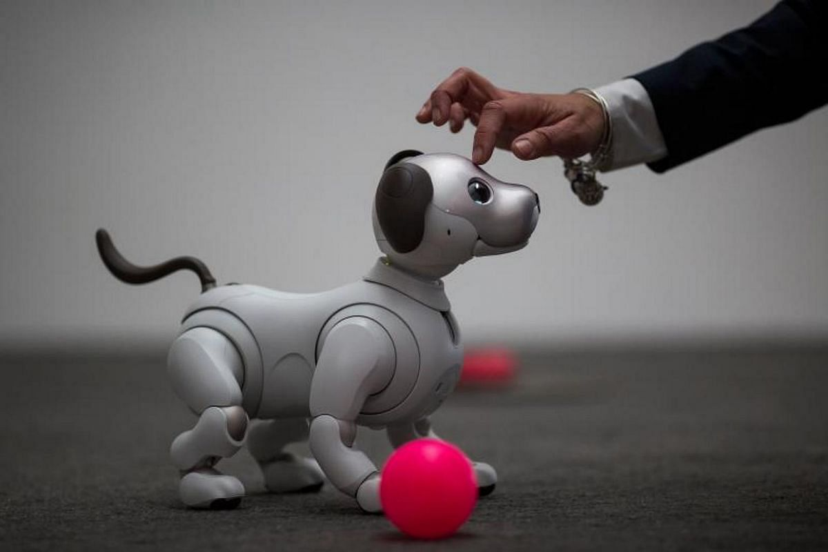 The newest generation of the Aibo robot, which uses artificial intelligences, is demonstrated on the eve of CES in Las Vegas, Nevada, on Jan 8, 2018.